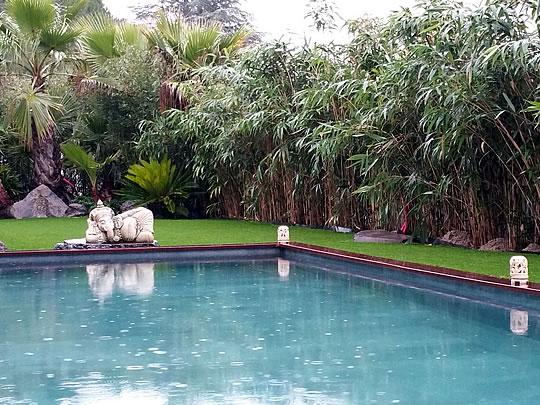 Le Jardin Zen, un petit paradis voué à la méditation botanique